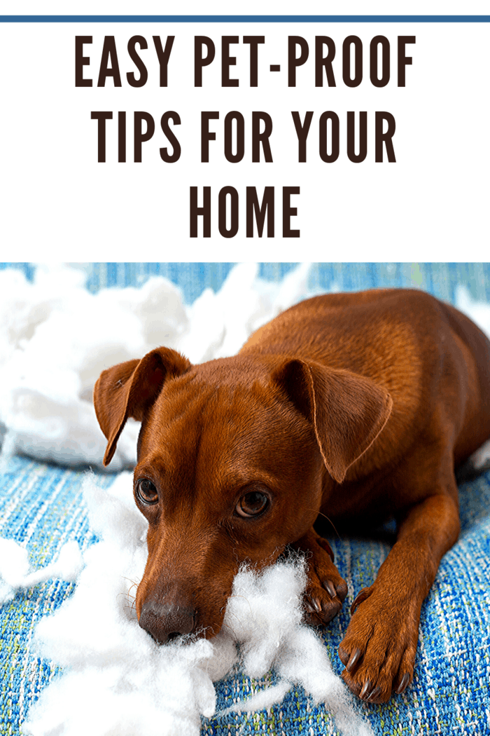 To truly pet-proof your home, start by getting down on the floor to see the world the way your pet sees it.