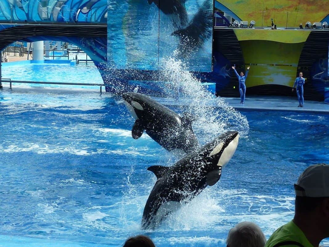 5 Things You'll Love About Seaworld Orlando