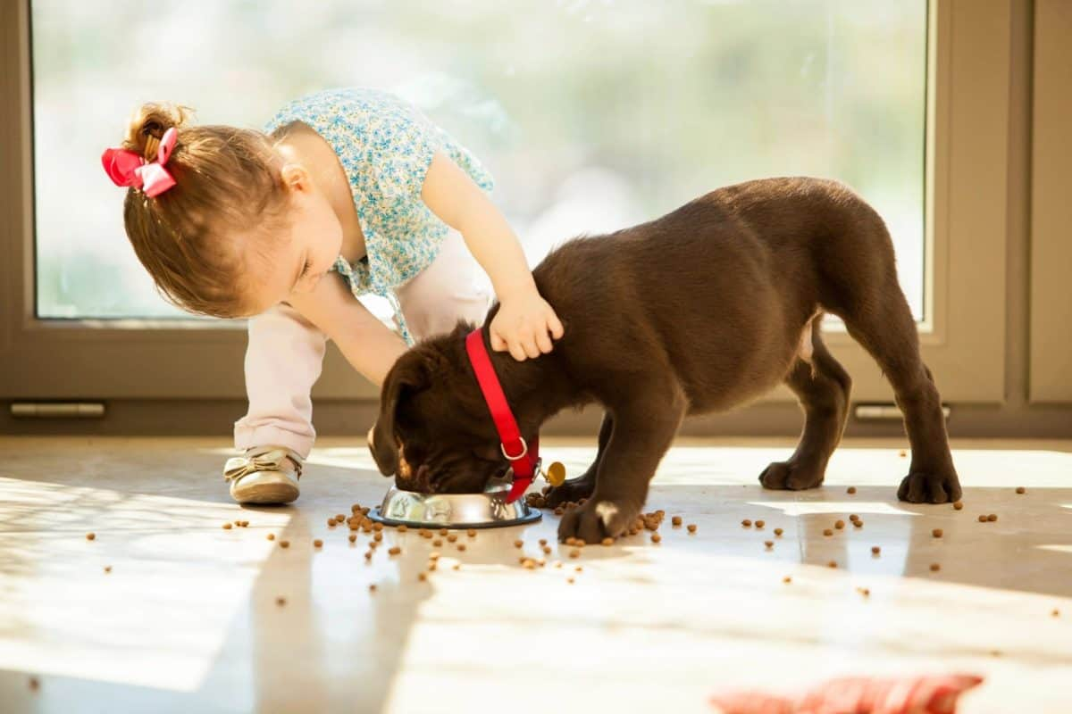 Tips For Feeding Your Puppy