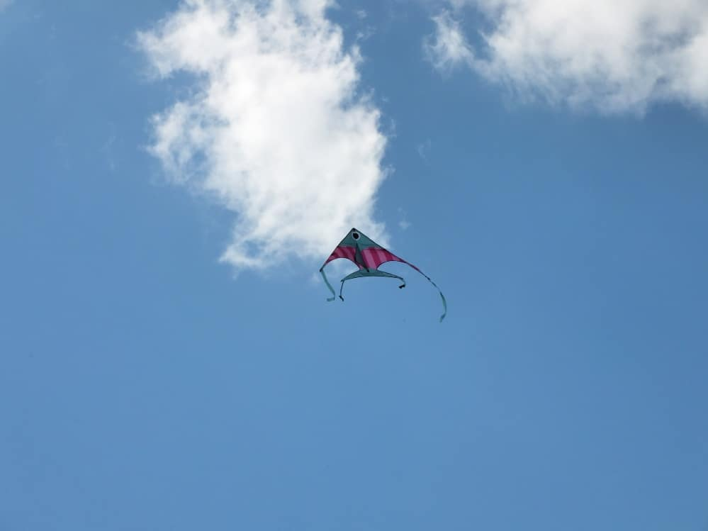 antsy pants delta fish kite