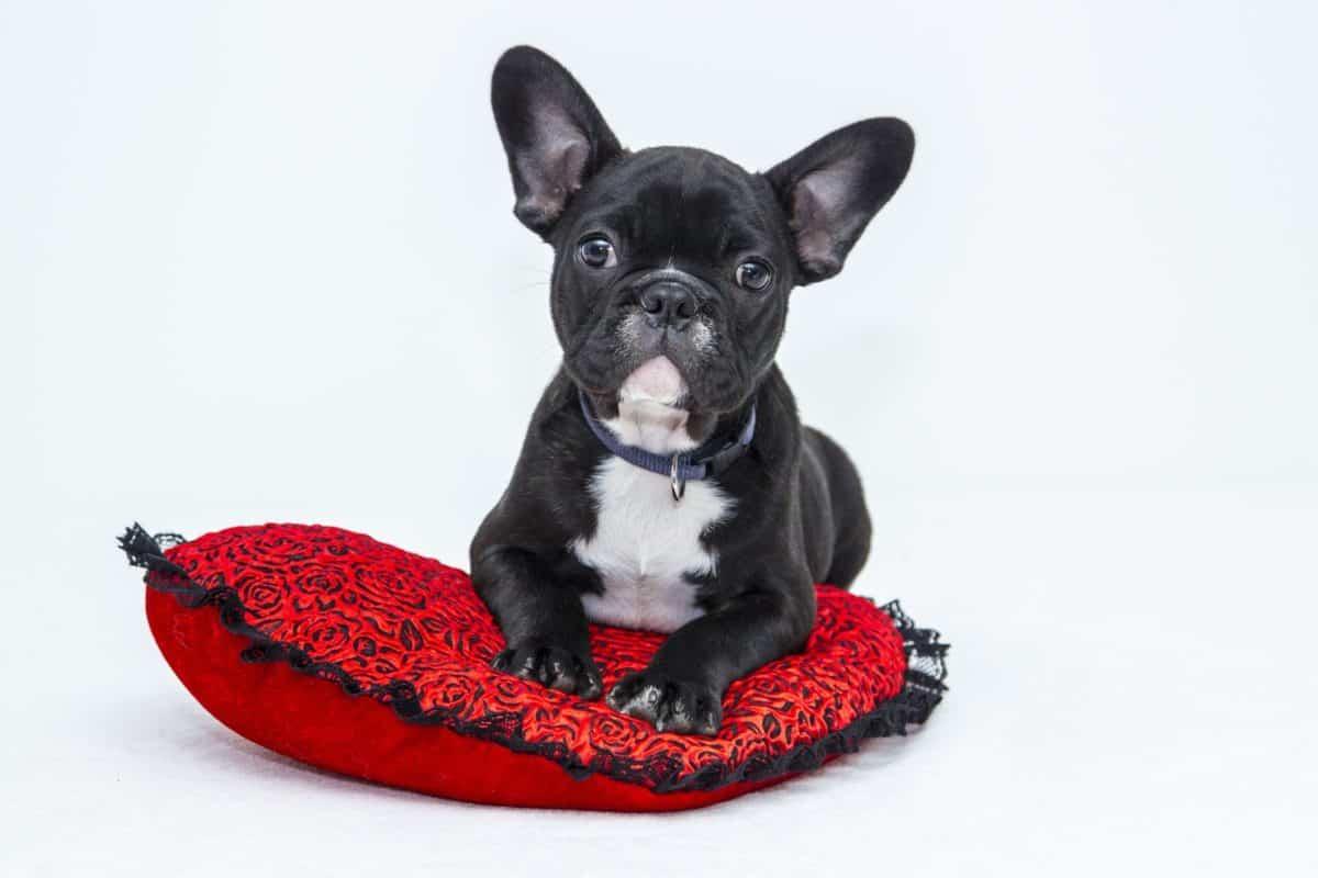 make your dog an instagram star