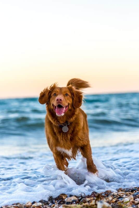 spoil your dog with these 5 treats