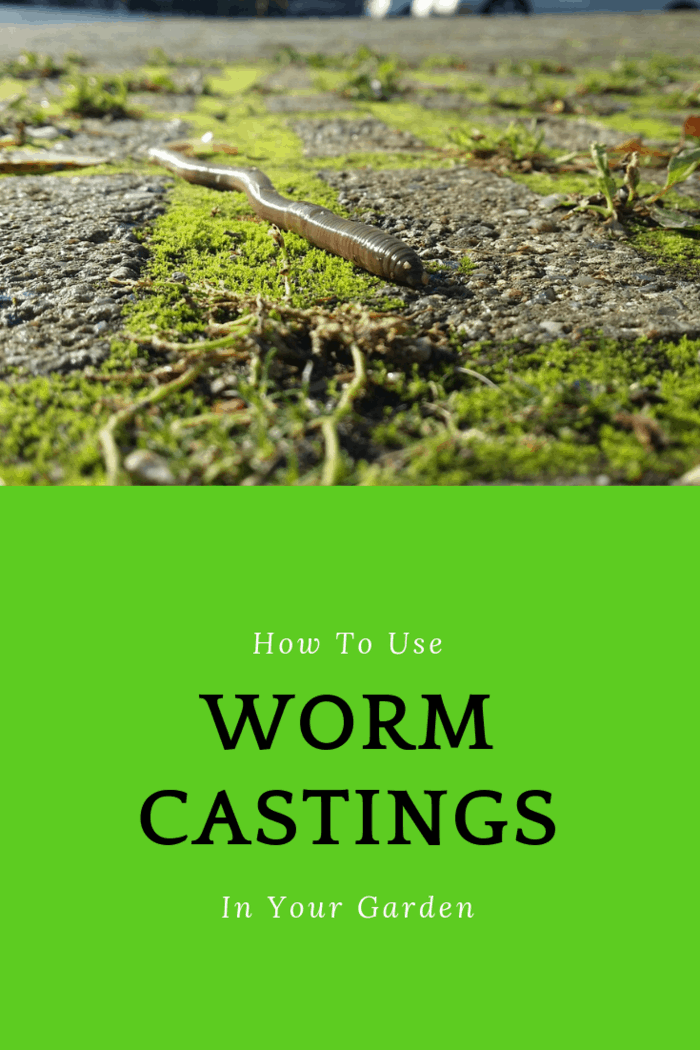 Using worm castings in your garden will help create an organic, nutrient-rich soil for growing fruits, vegetables, and other crops.