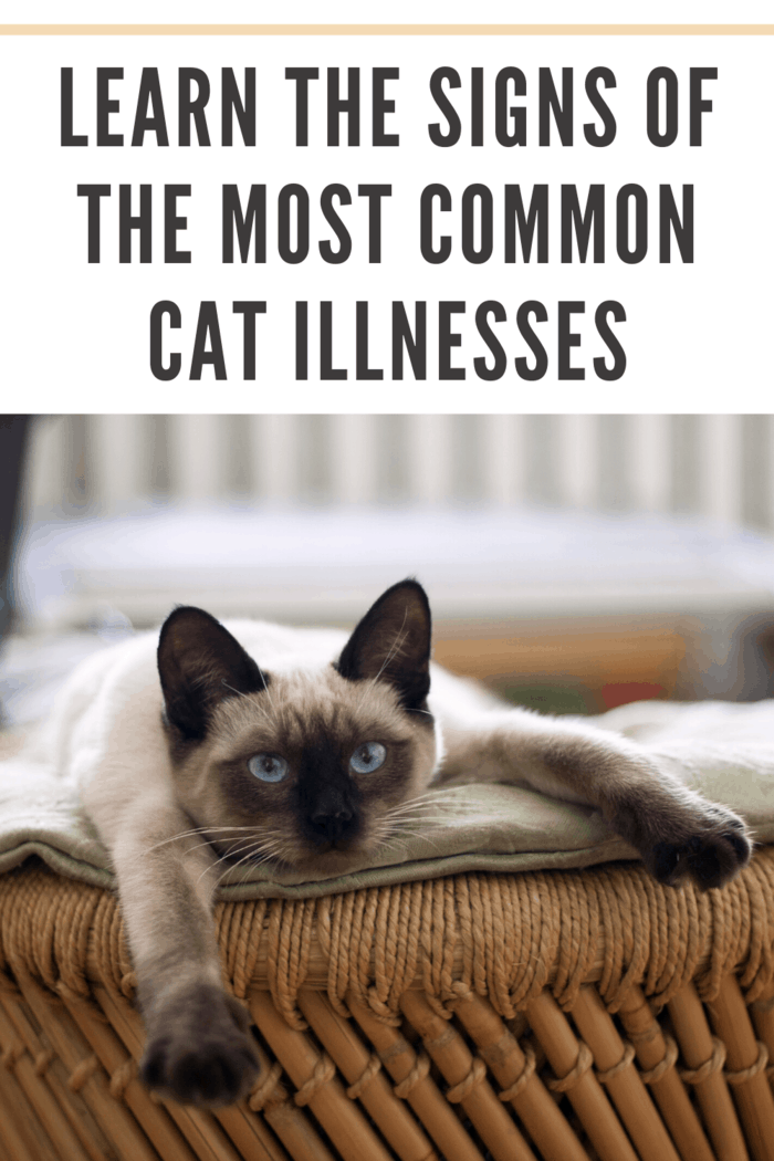 """Bear in mind that cat illnesses don't always signal that the """"end is near."""""""