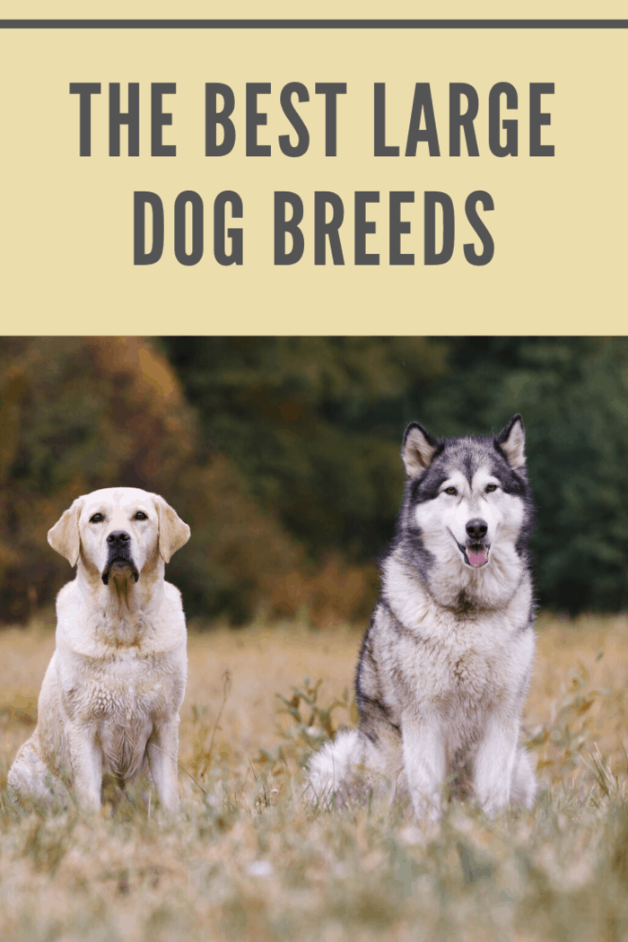 Various breeds of dogs sitting on autumn meadow