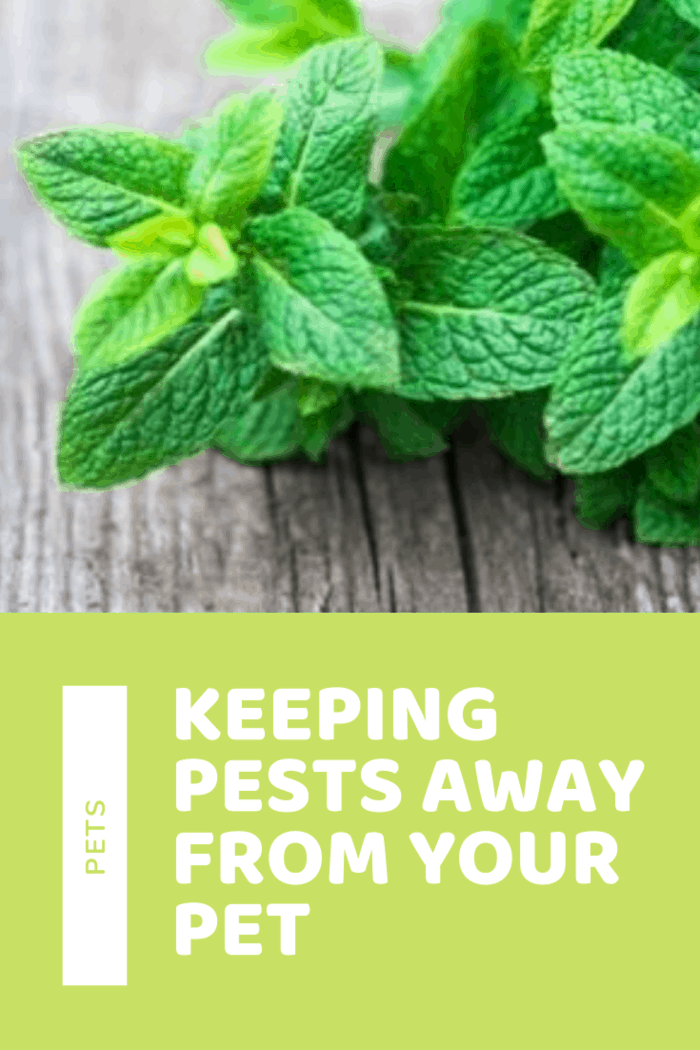 Plants like Lavender, Lemon Balm, Rosemary, Basil, Catnip, and Peppermint are all plants that repel insects and are safe for pets. Moreover, they add to the beauty of your garden in the summers.