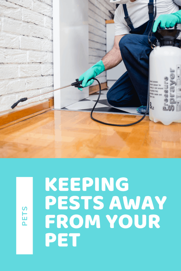 Many pest control services can help you get rid of any kind of pests in your home and garden. But most pest control services use toxic products to kill pests. If you have a dog or cat, it is essential to find a company that uses pet-friendly products.