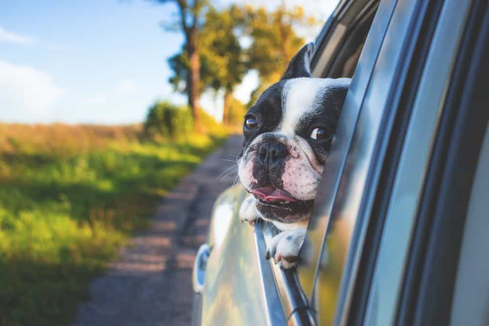 Everything you need to know about best dog seat covers for dog hair to keep your car clean and allergies at bay while traveling with your dog.
