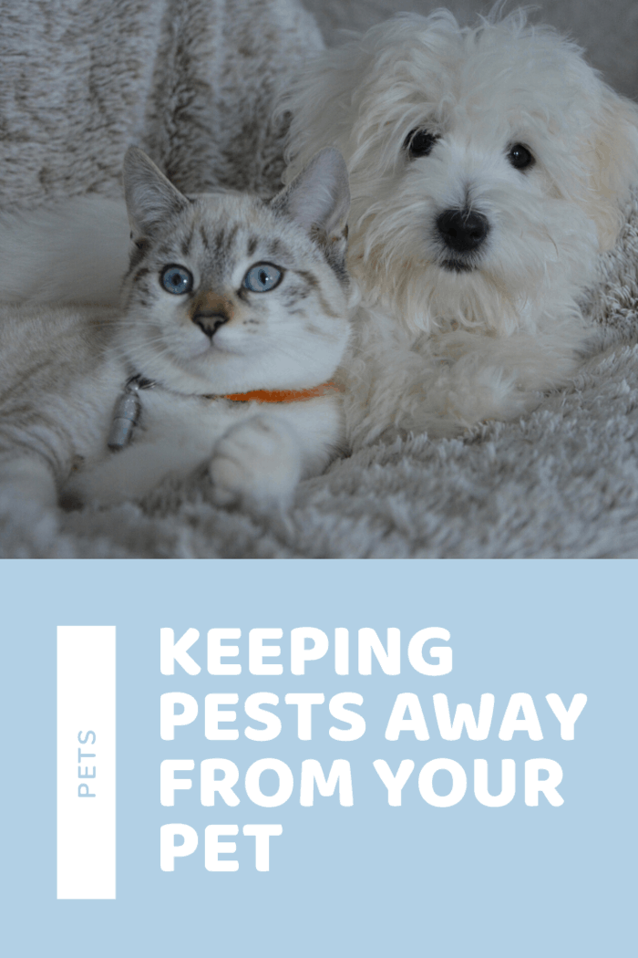 If you have a dog or cat, it is important to find a company that uses pet-friendly products. Here are some tips for keeping pests away from your pet.