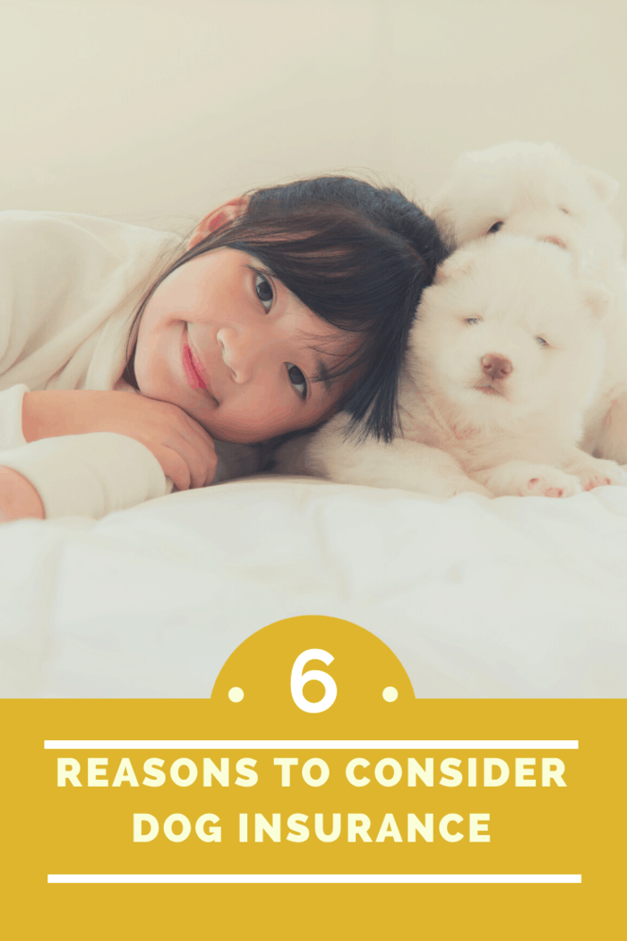 Dogs can also cause other injuries in addition to bites. Just like with property damage, the injured individual can make a claim for compensation.