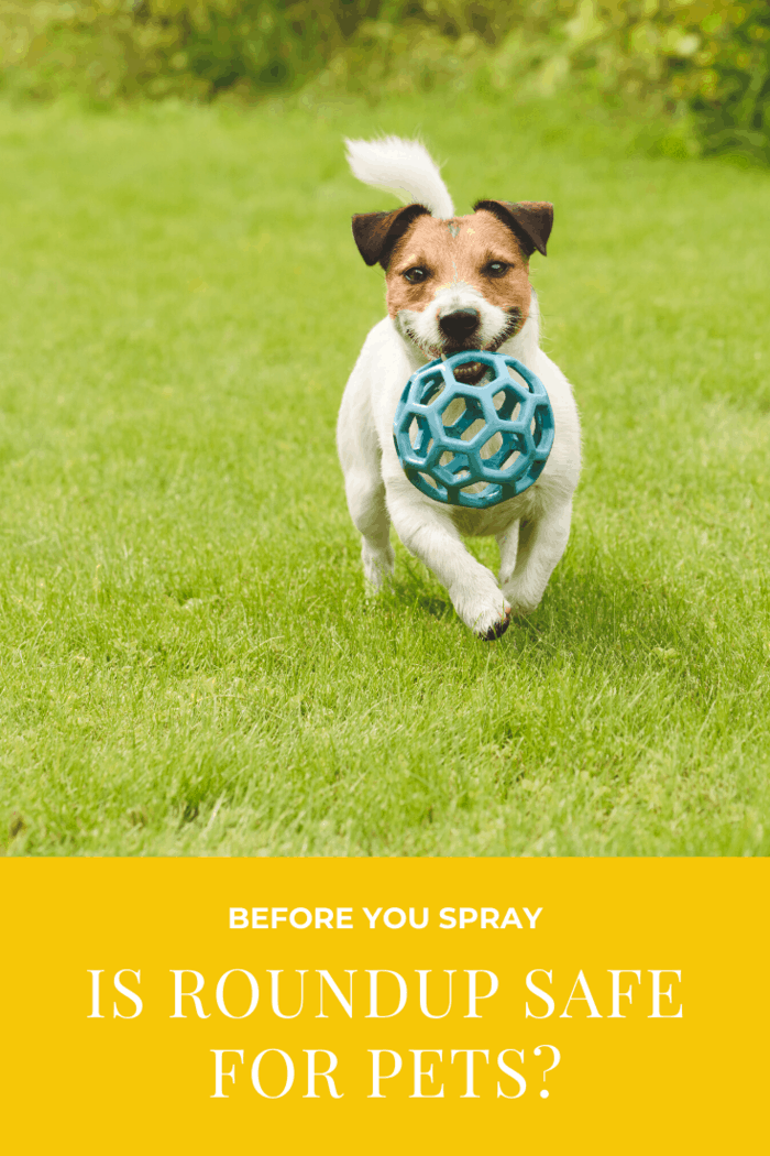 So, what exactly is glyphosate, and is Roundup safe for pets?