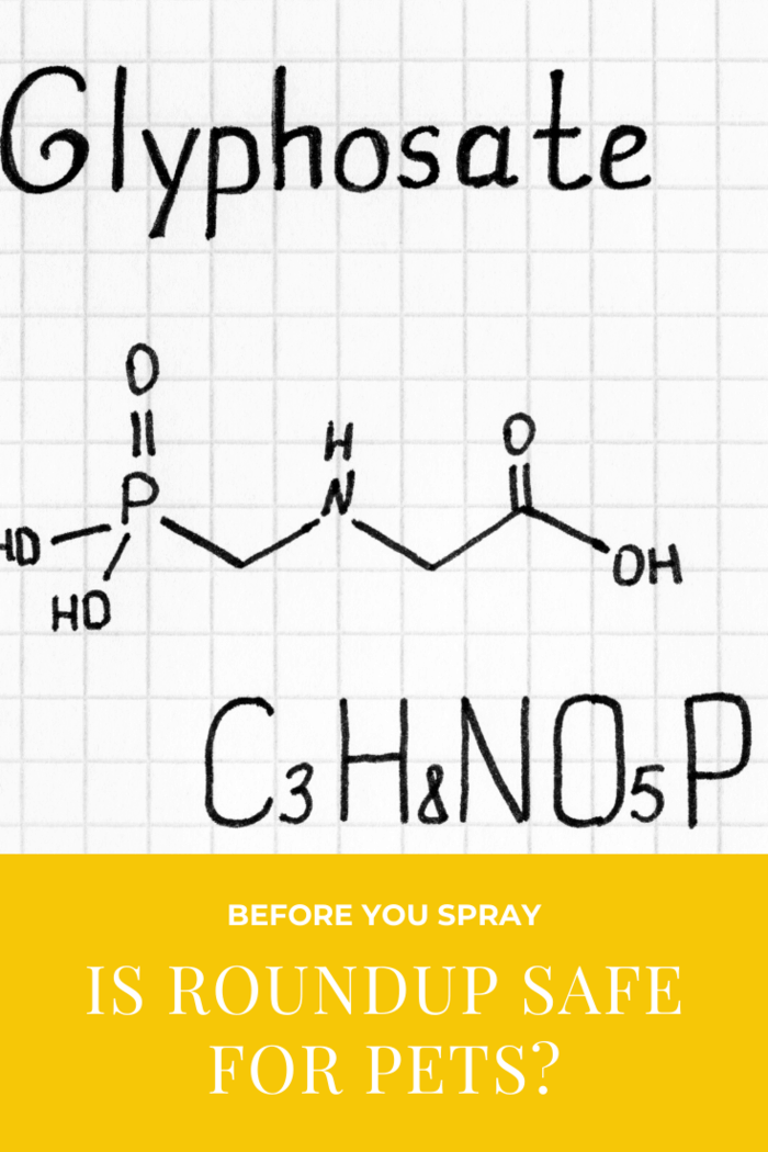 Glyphosate, Roundup's active ingredient, is now considered a carcinogen for humans and research links it to antibiotic resistance and hormone disruption.
