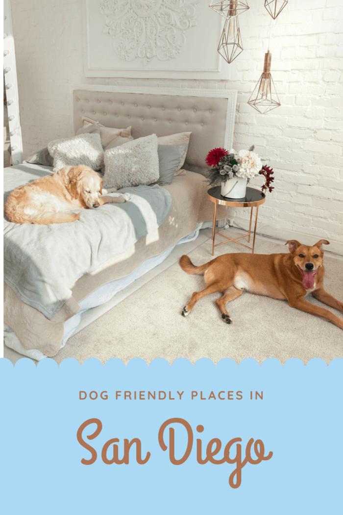 Are you looking for some lovely pet friendly hotels in San Diego?