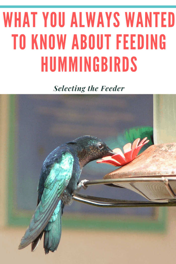 Buying a few different styles of feeders may help attract more birds.