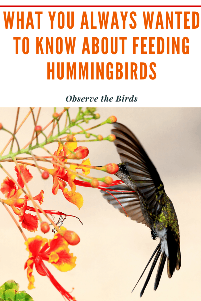 Track the hummingbird activity in your feeders. This helps you determine the busiest feeding times. Use that information to know when to approach the feeders.