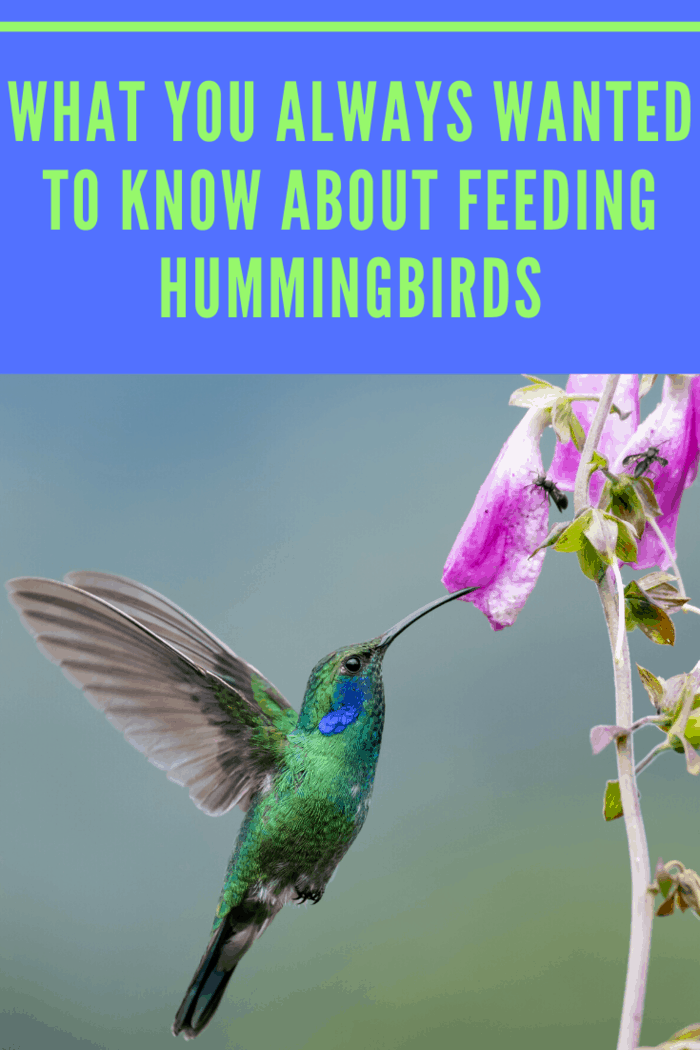 Feeding hummingbirds help you attract wildlife and build trust with them. Over time, you may be able to tame the hummingbirds enough to let them sit on you or even eat from your hand.