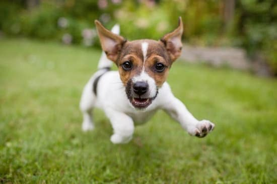 While dogs are inherently happy creatures, keeping up with their innate nature might be tricky here are 5 Methods to Keep your dog cheerful and healthy.