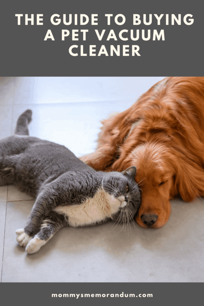 dog and cat snuggling on floor together