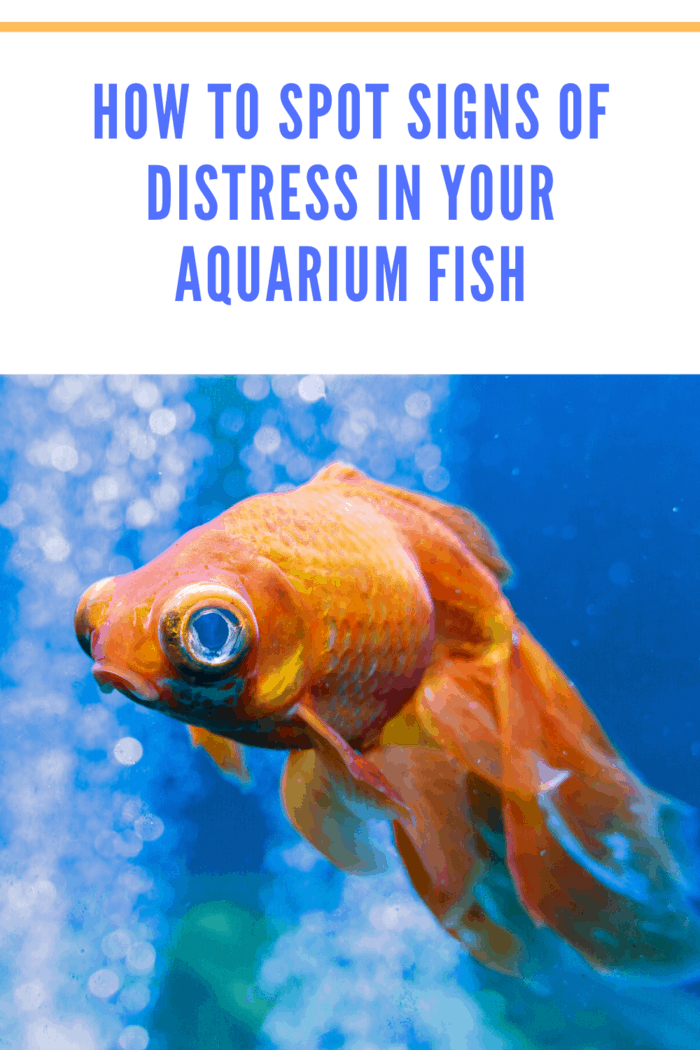 There are various potential stressors that cause stress in aquarium fish.