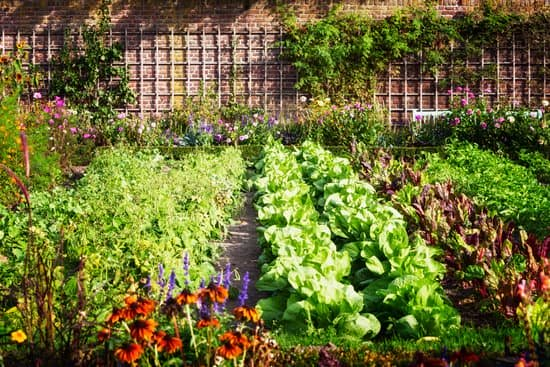 a tidy garden of vegetables and edible plants