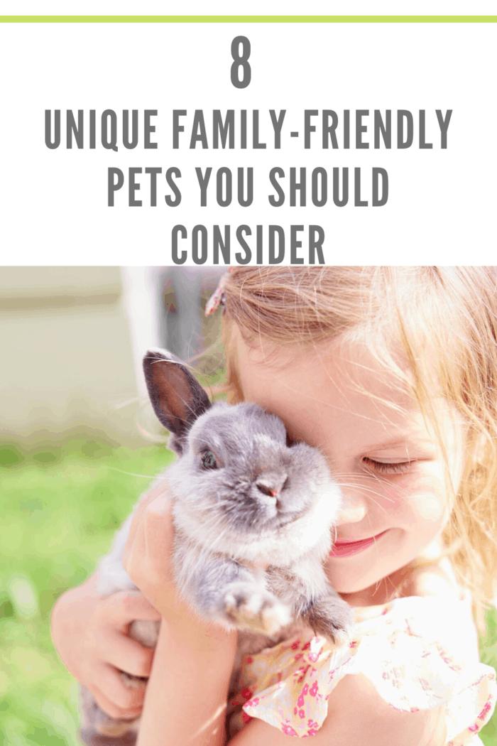 little girl holding rabbit