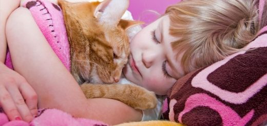 Little girl and tabby cat napping.