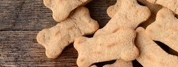 cbd dog treats recipe close up