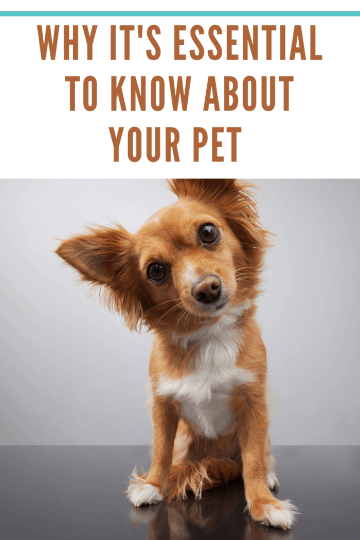Curius Cute Little Dog depicting why it's essential to know about your pet
