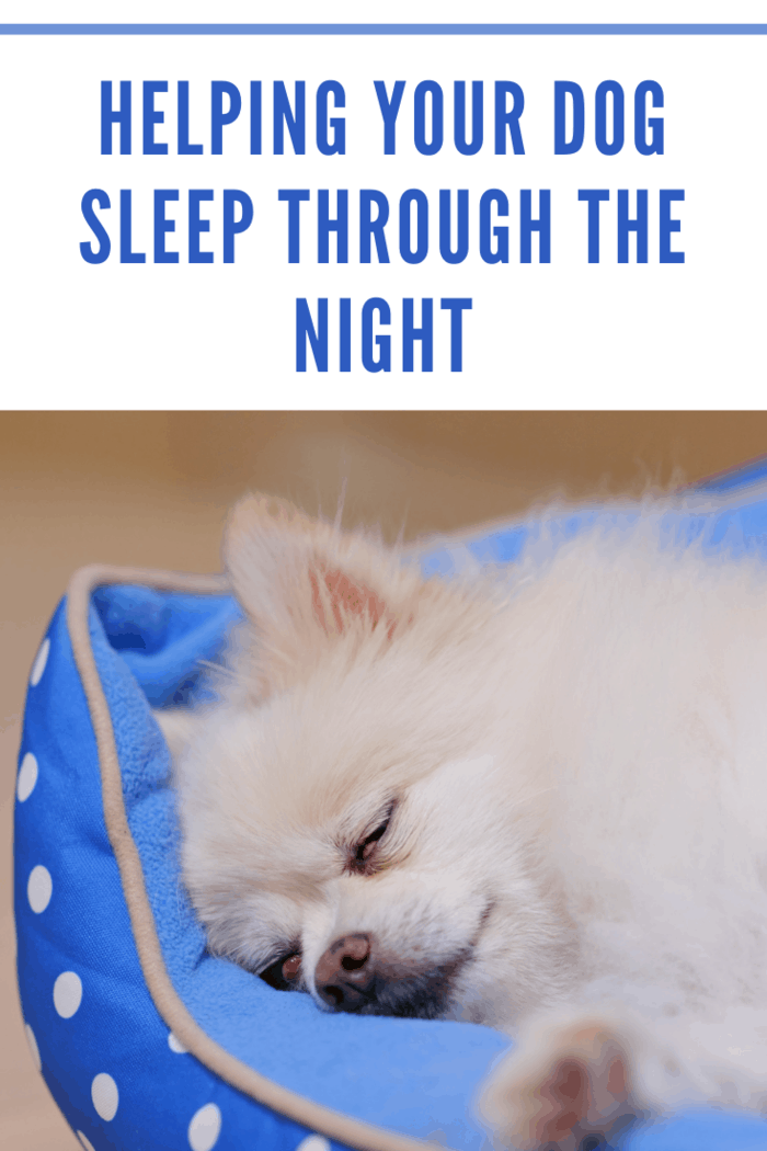 Pomeranian dog sleep on bed