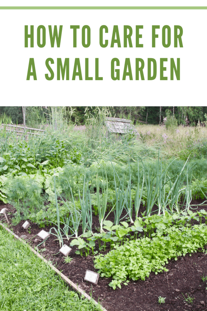 Small vegetable garden with growing plants
