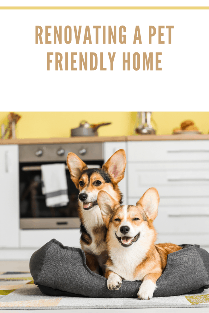 Cute Corgi Dogs with Pet Bed in Kitchen at Home.