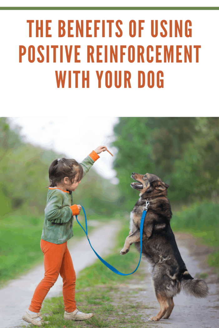 little girl training dog with positive reinforcement
