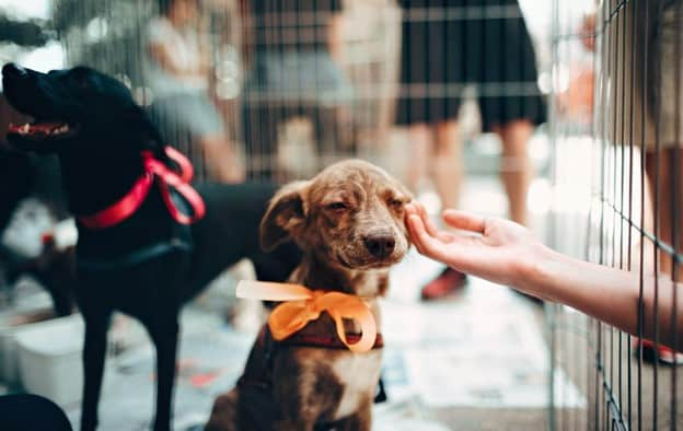 small brown dog with orange ribbon