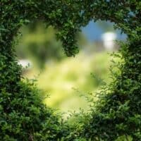 a close-up shot of a bush trimmed to create a heart shape