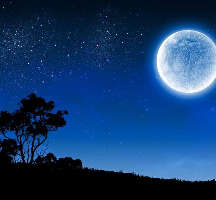 Silhouette of tree against night sky with full blue moon