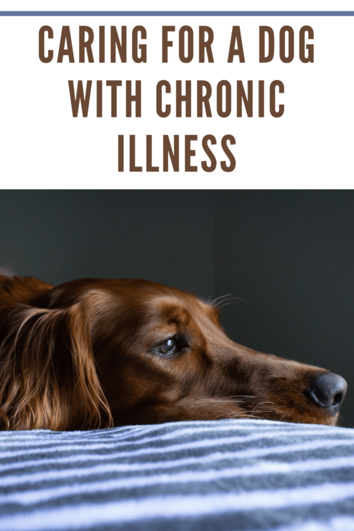 brown down with chronic illness laying on blue blanket