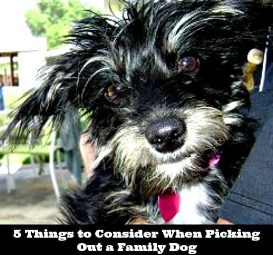 5 Things to Consider When Picking Out a Family Dog