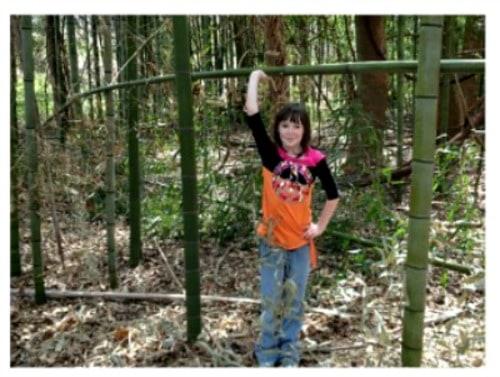 Bamboo in North Carolina