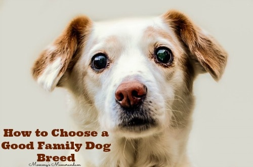 How to Choose a Good Family Dog Breed