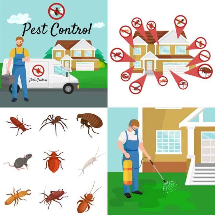 The Preemptive Plan - A Proactive Guide to Avoiding Pest ...
