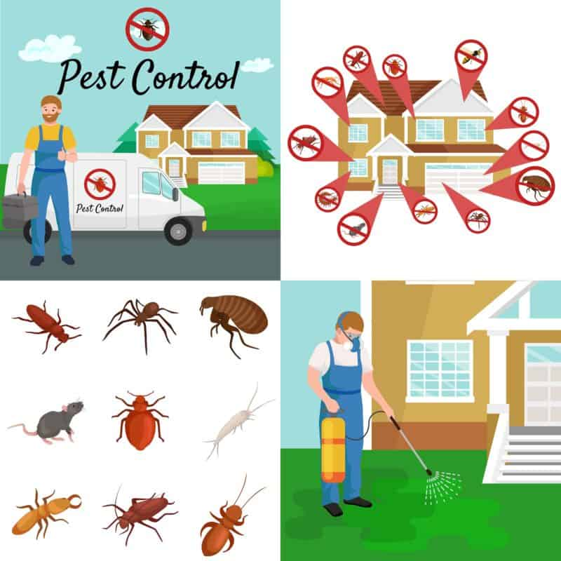 The Preemptive Plan - A Proactive Guide to Avoiding Pest Infestations