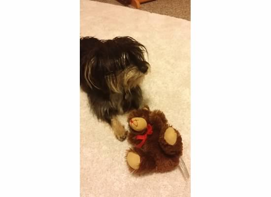 bailey and her teddy bear