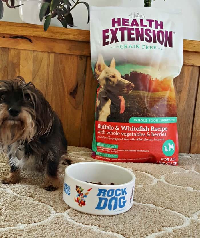 bailey mae with holistic dog food