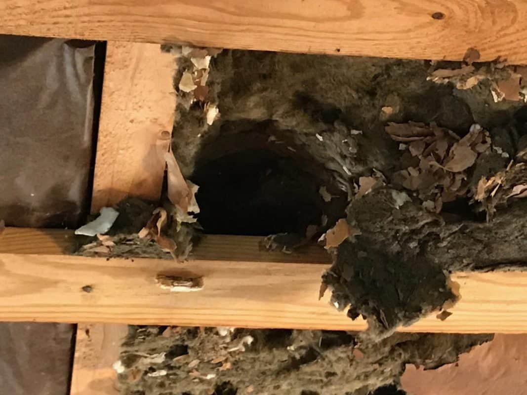 home remodel snake tunnel in roxul