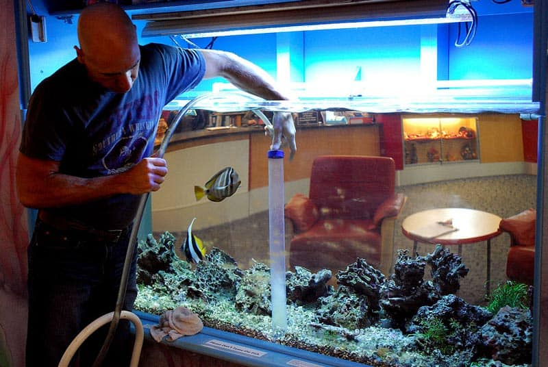 How to clean a fish tank do it in easy steps mommy 39 s for How to clean out a fish tank