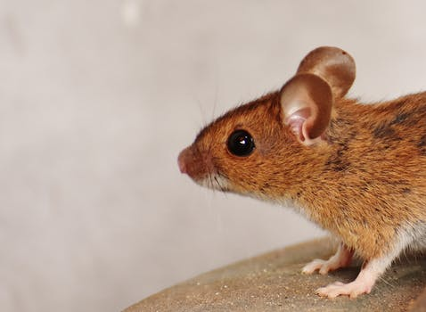 Useful Tips for Keeping Pests Away from Your Home