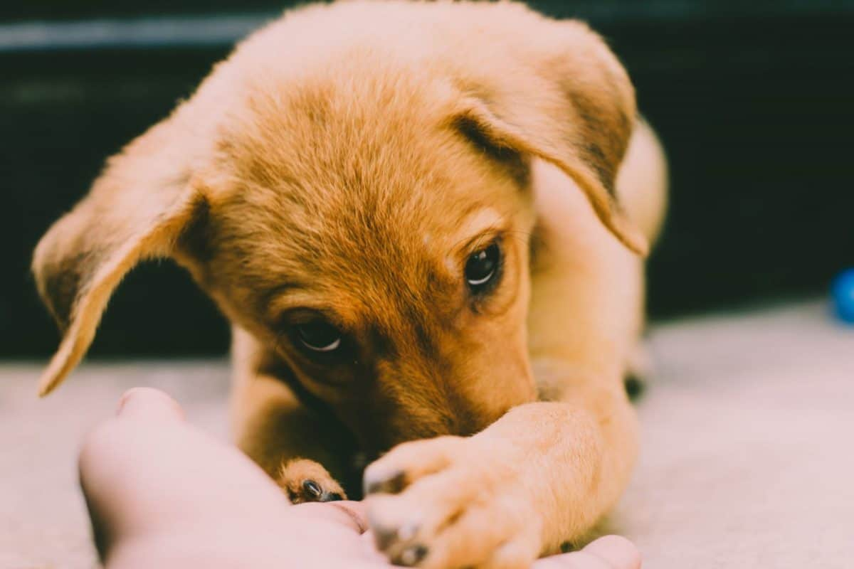 How to Get Rid of Pet Hair on Carpets and Furniture